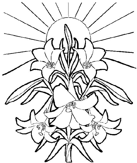 Clip Art Of Easter Lilies.