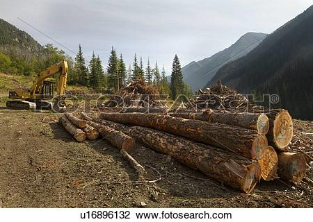 Stock Photo of Clearcut Logging, spotted owl habitat destruction.