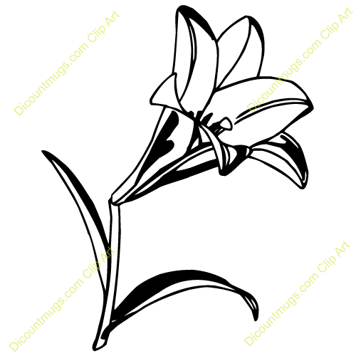 Lily Clipart.