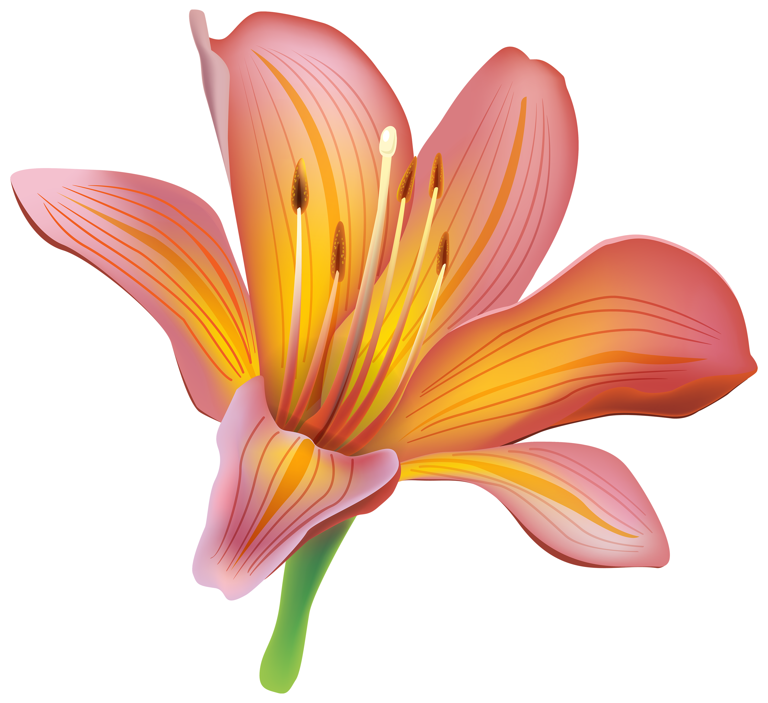 Lily Flower PNG Clipart.