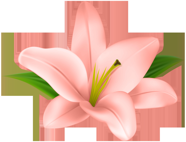 Lilium Clip art.