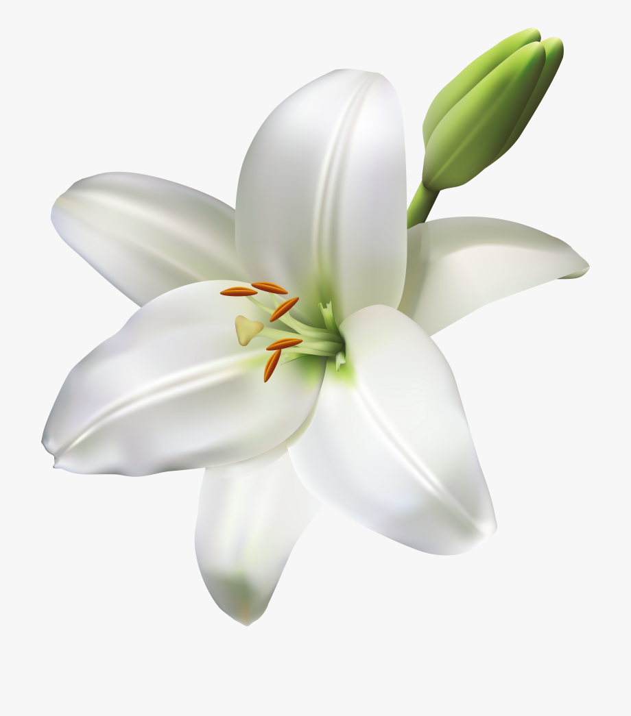 Flowers Png Clipart Library Download.