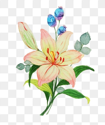 Lily Flower PNG Images.