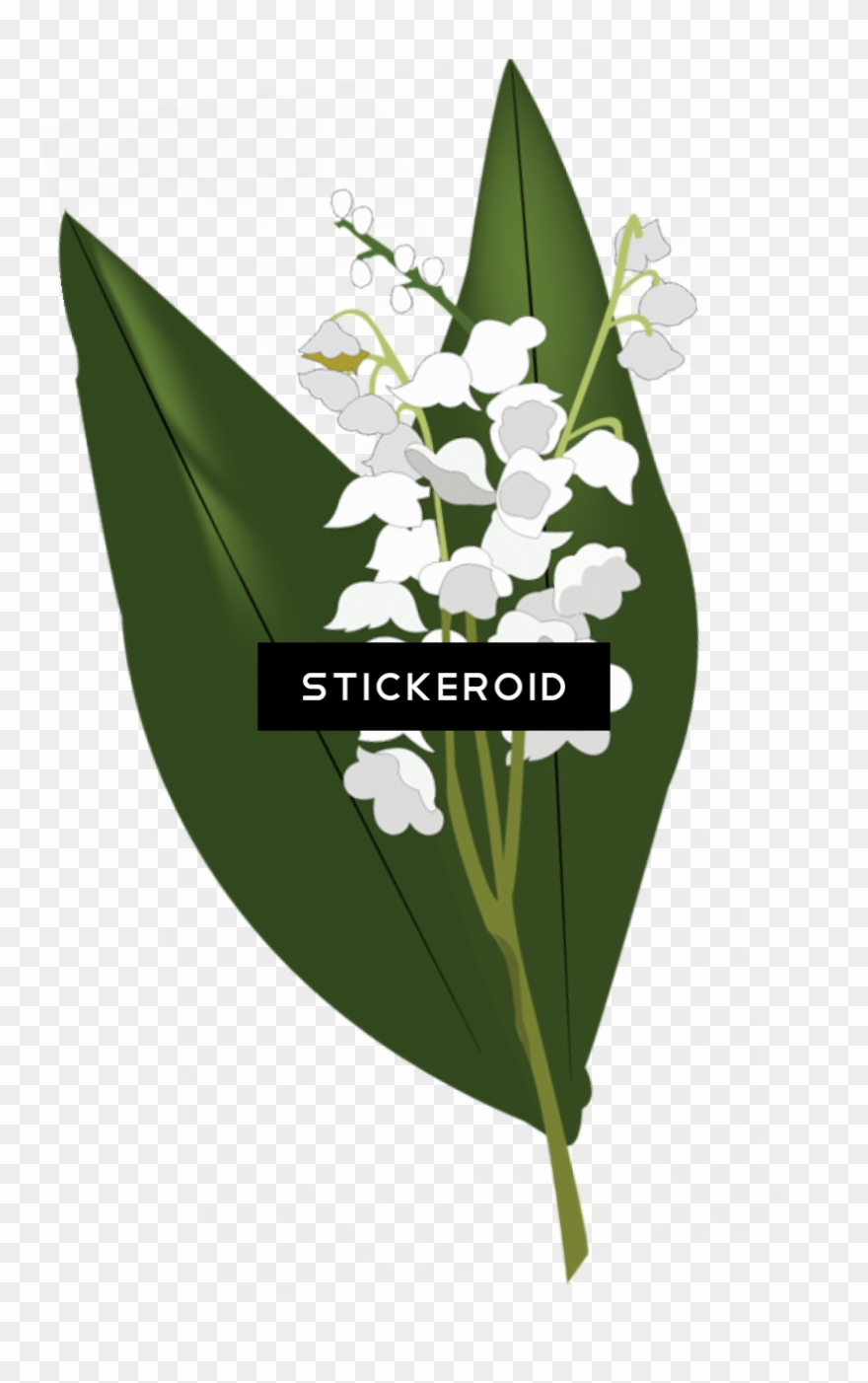 Lily Of The Valley Hd Flowers Nature.