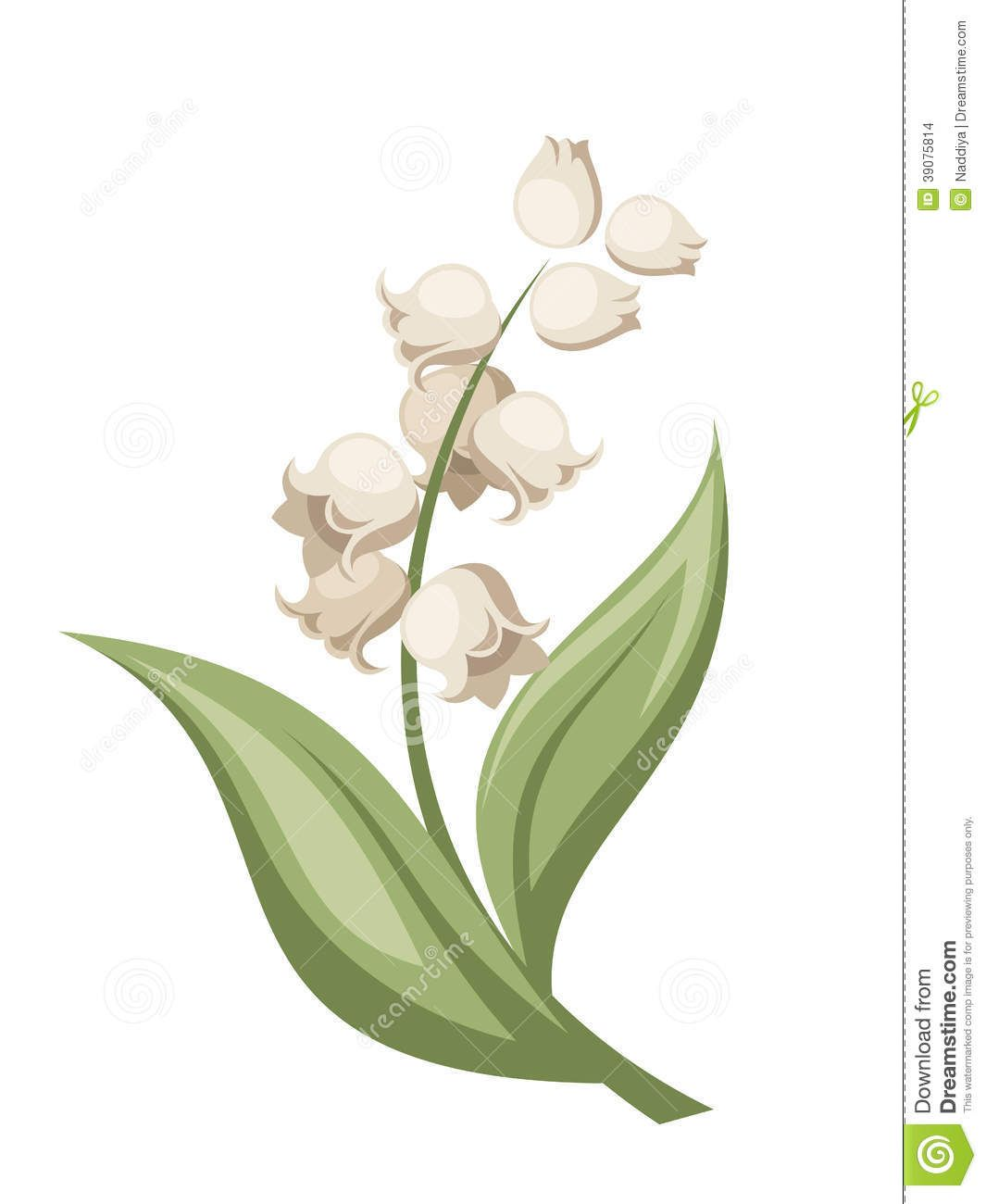 Lily Of The Valley Flower. Vector Illustration. Stock Vector.