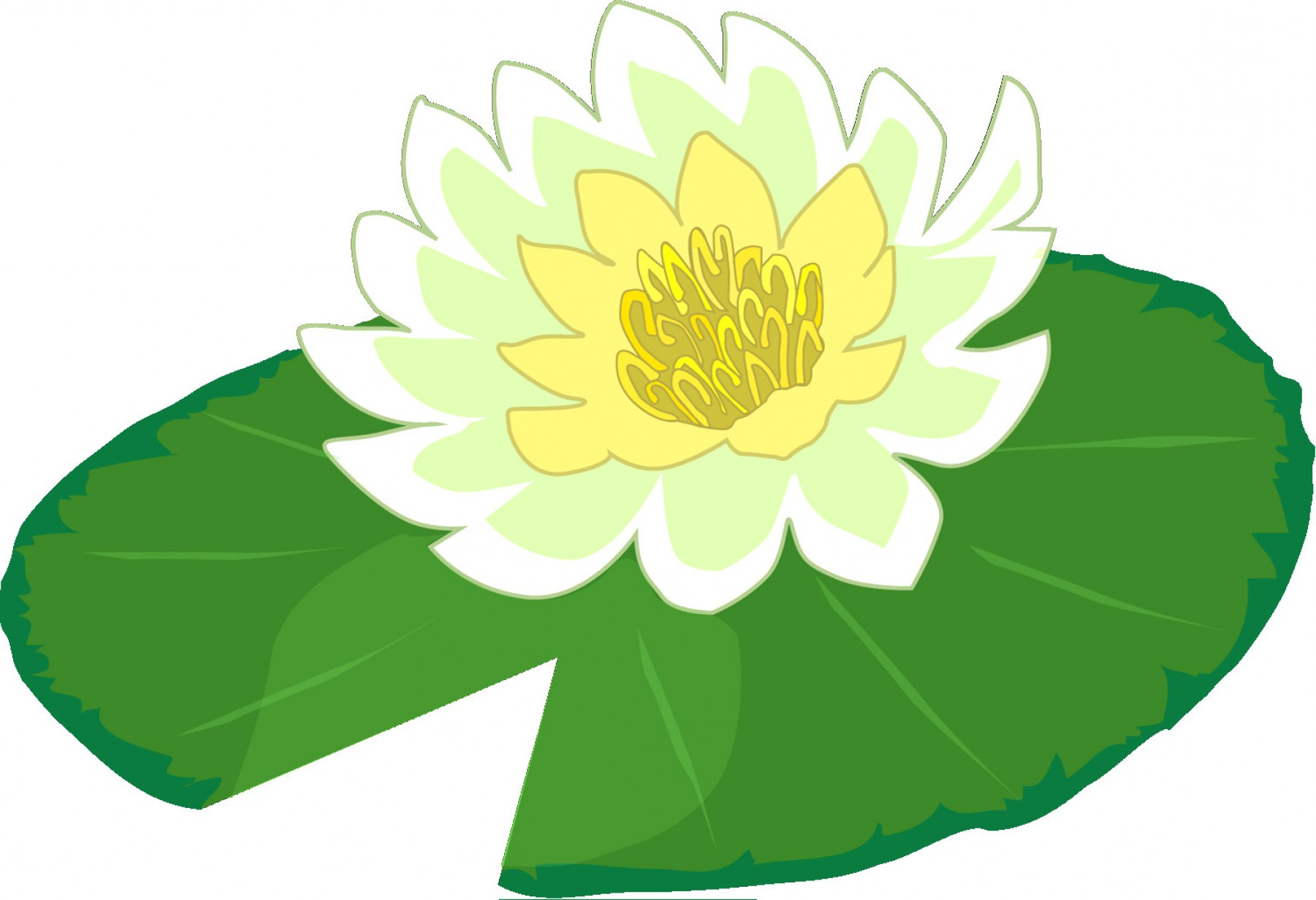 Lily Pad Vector.