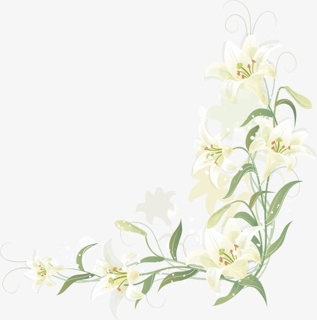 Hand Painted Lily Border, Vector, Cartoon, Hand Painted PNG.