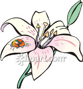 Free clip art lilies.