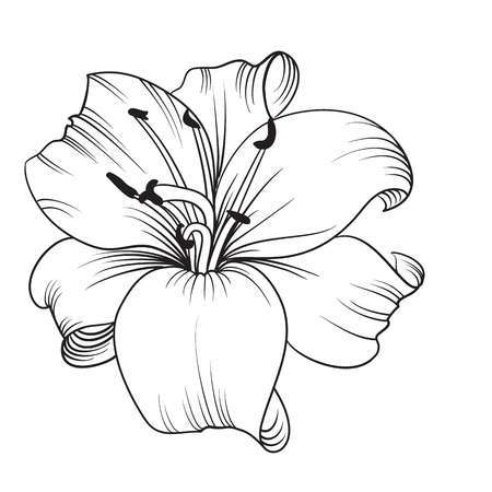 Black and white lily clipart 4 » Clipart Portal.