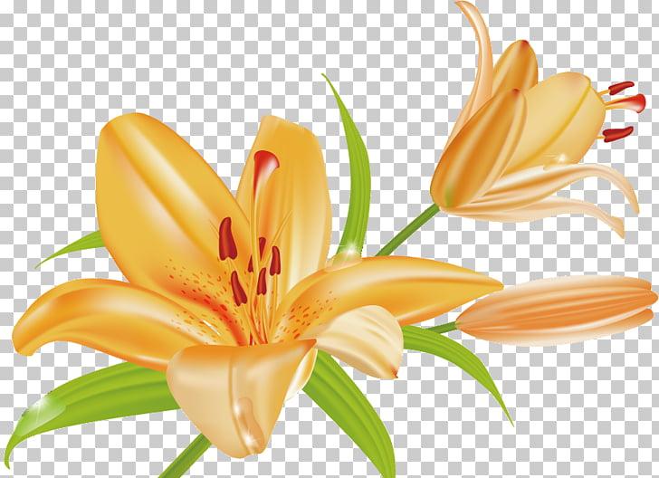 Orange lily Tiger lily Arum.