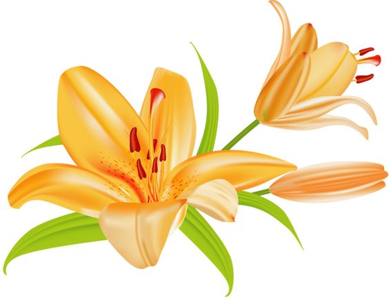 Lilies Clipart.