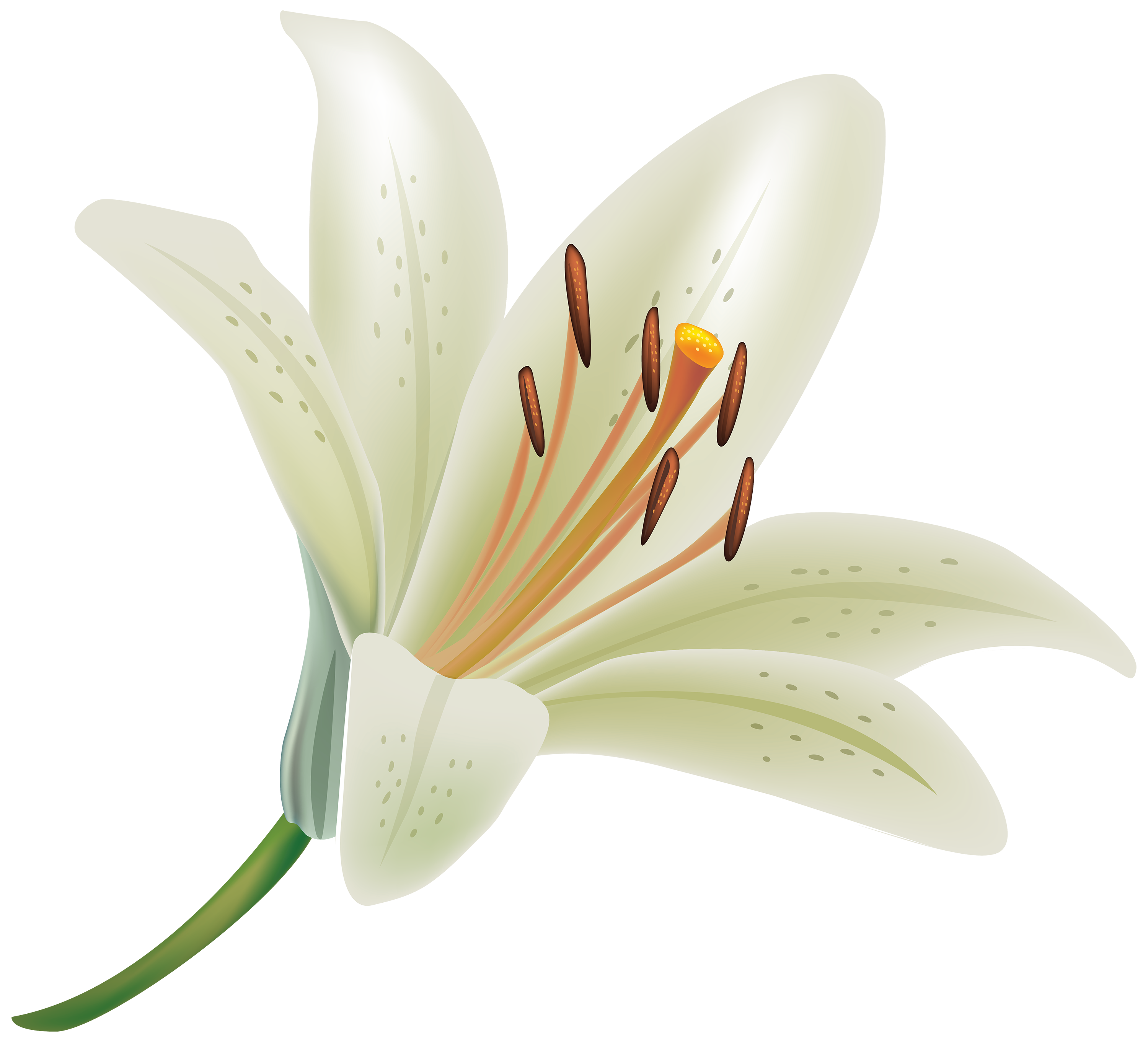 White Lily Flower PNG Clipart.