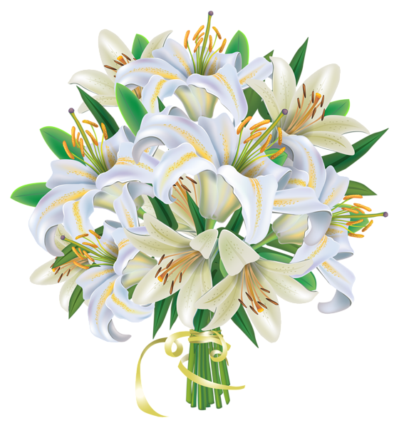 Tulip PNG image.