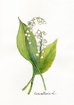 lily of the valley drawing.