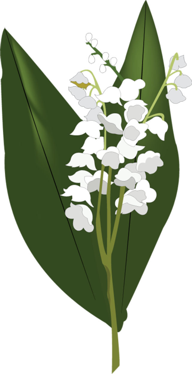 Lily of the valley clipart - Clipground