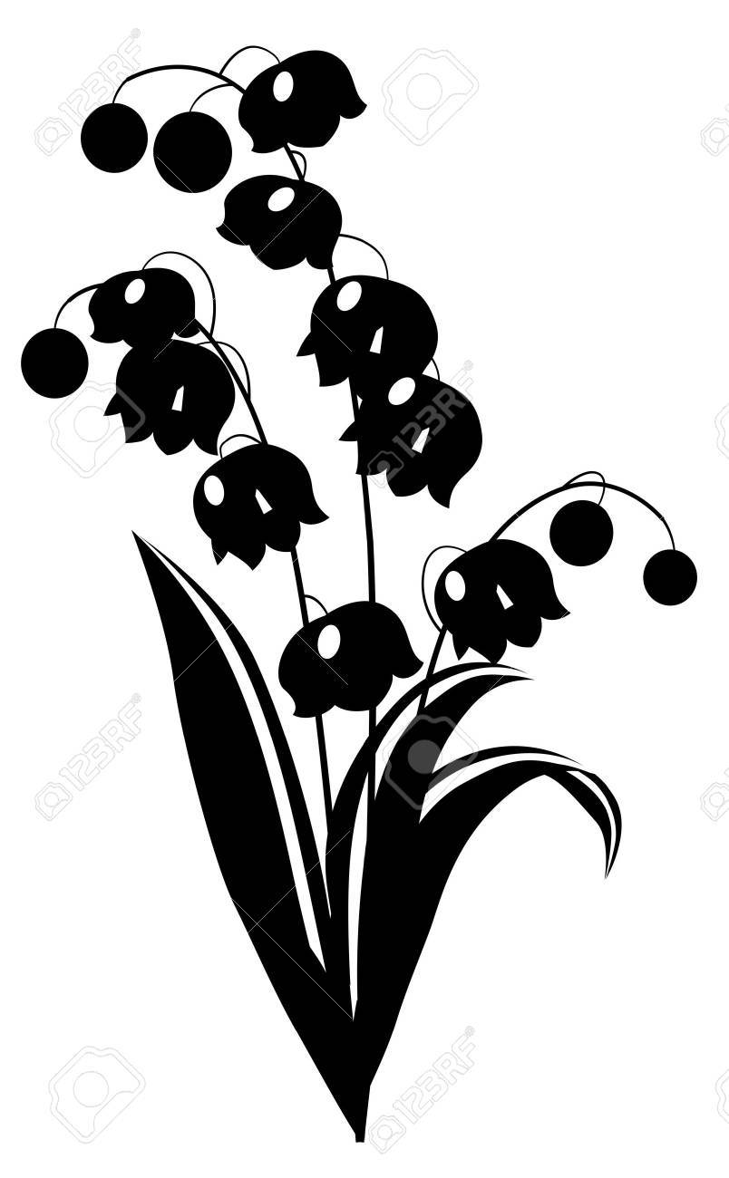 Black and white lily of the valley.
