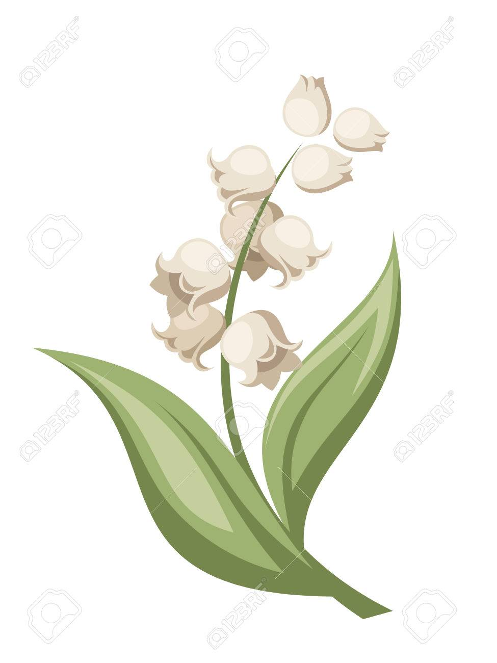 Lily of the valley flower Vector illustration.