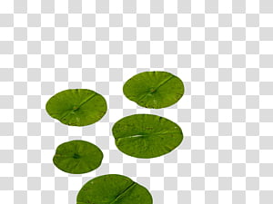 Lily Pads transparent background PNG cliparts free download.