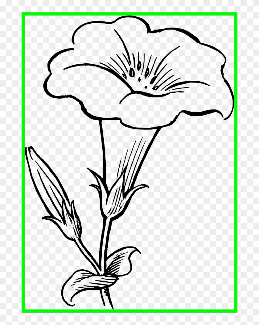 Lily Pad Flower Png Black And White.