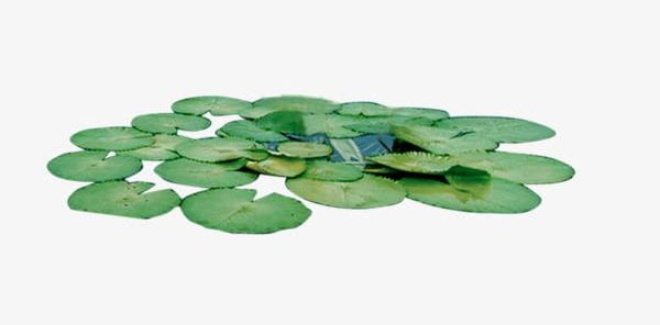 Green Lily Pads PNG, Clipart, Green, Green Clipart, Leaf.