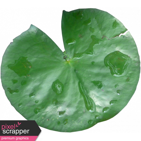 Pond Life Lily Pad 01 Graphic By Marisa #258925.