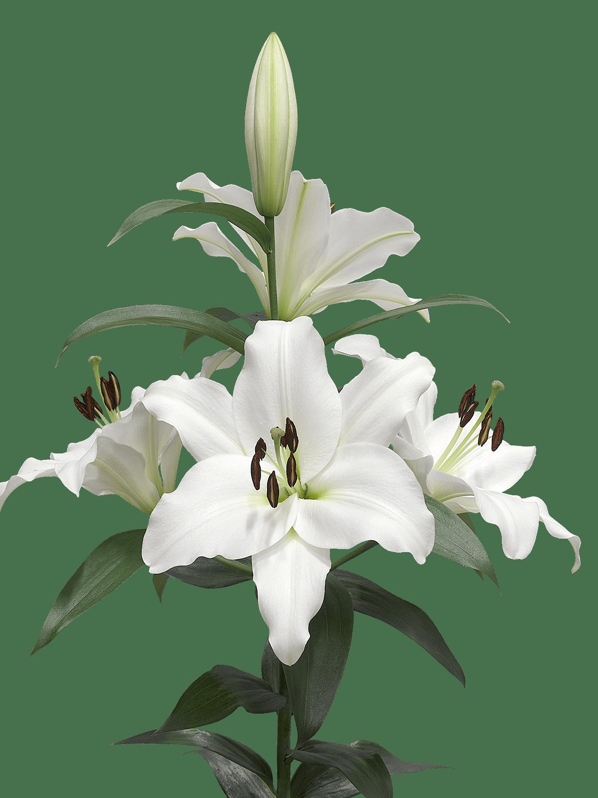 A Few Lilies transparent PNG.