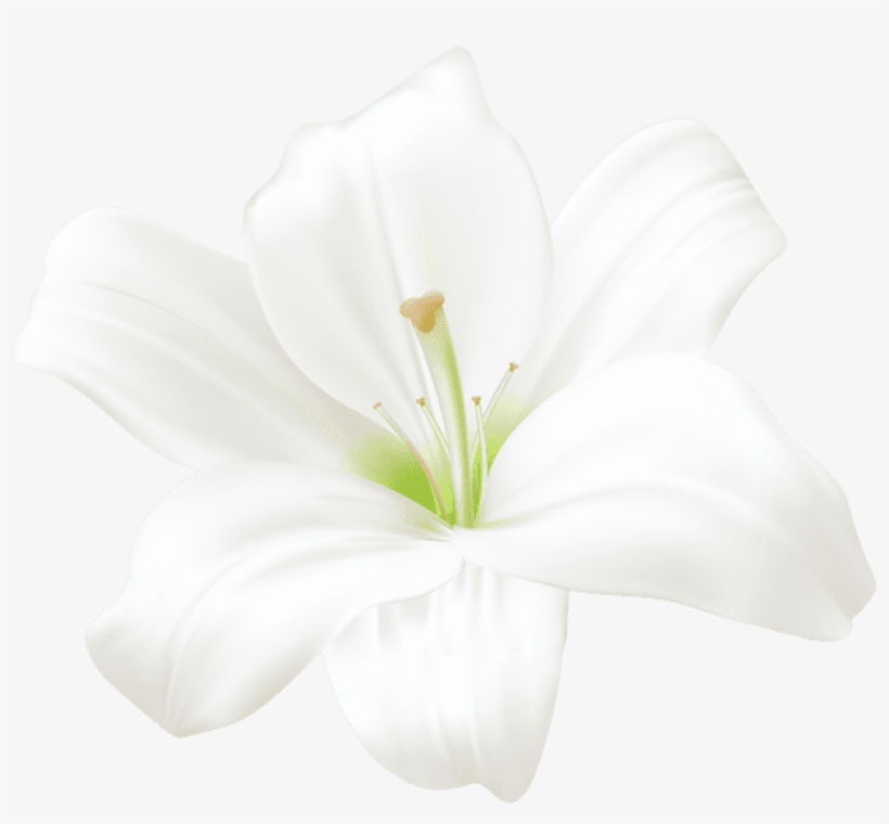 White Lilly, Art Images, Flower Art, Lilies, Anime.