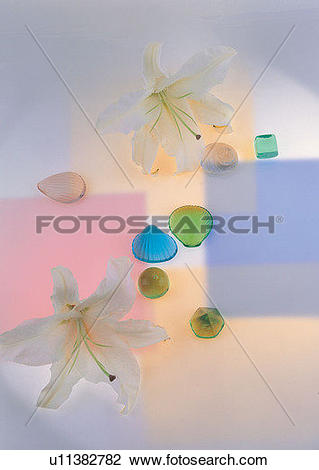Stock Photo of , flower, lily, stone, plant, sea shell u11382782.