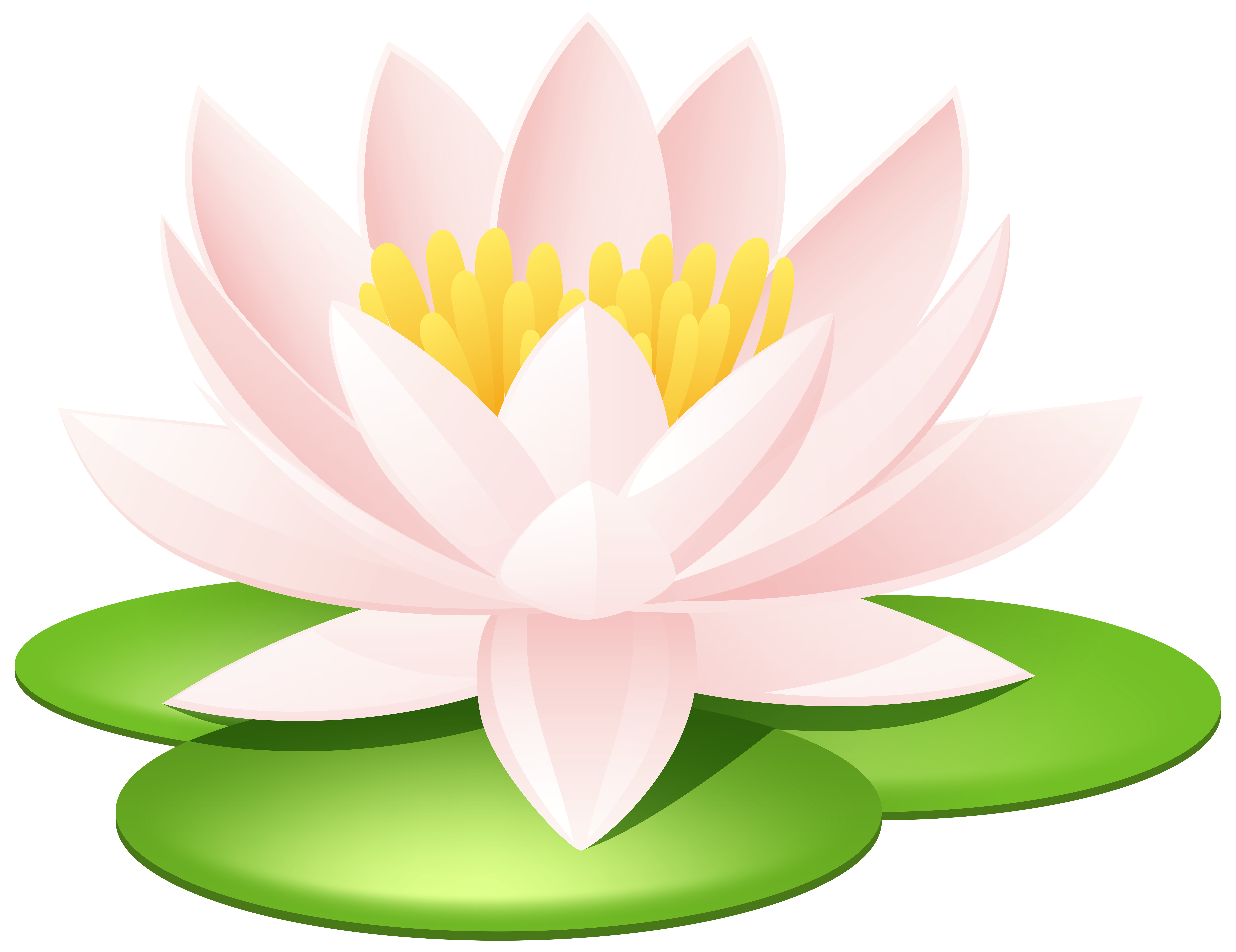 Water Lily Transparent PNG Image.