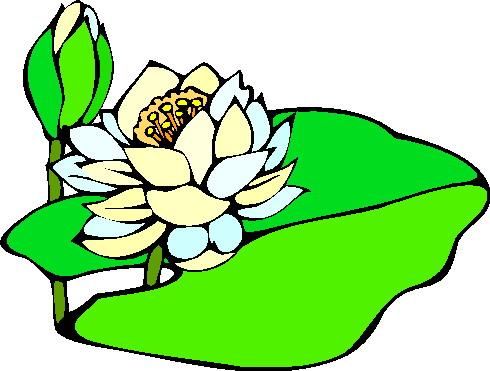 Water lily Clip Art.