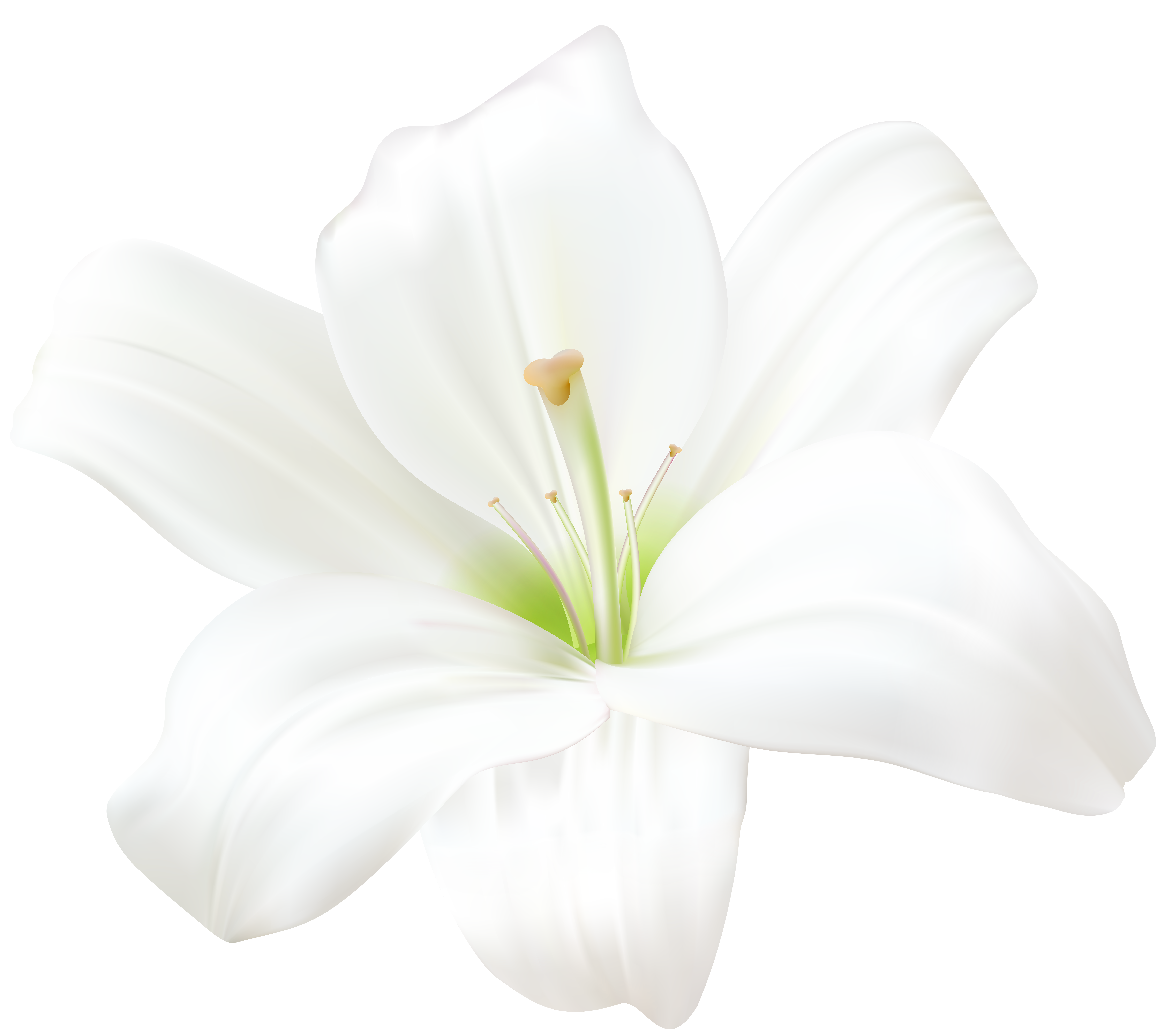 White Lily PNG Clip Art Image.