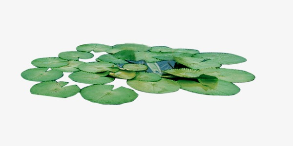 Lily Pads Png & Free Lily Pads.png Transparent Images #15769.
