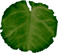 Lily Pad PNG Transparent Lily Pad.PNG Images..