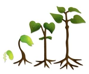 Bean Plant Clipart.