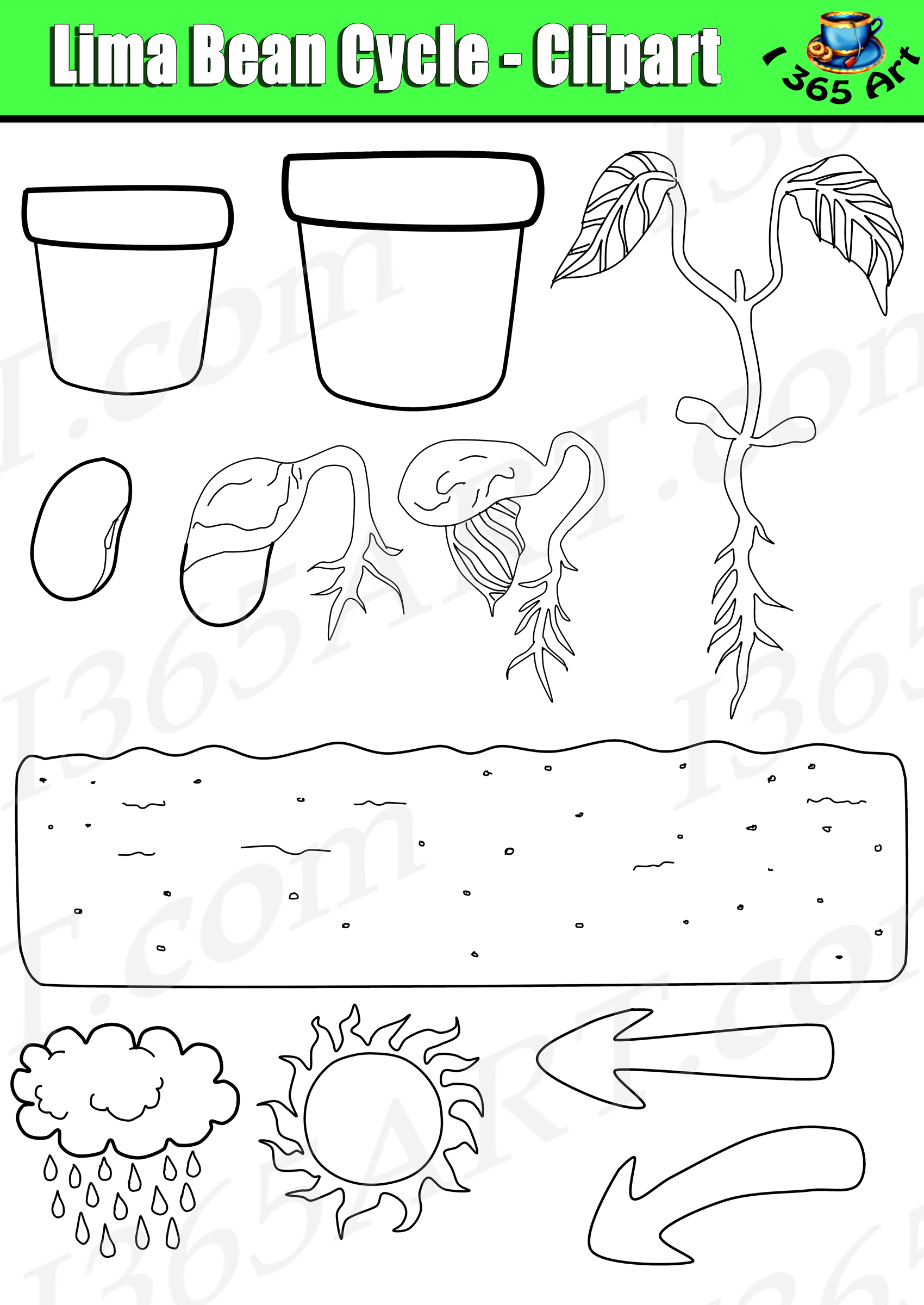 Plant Life Cycle Clipart.