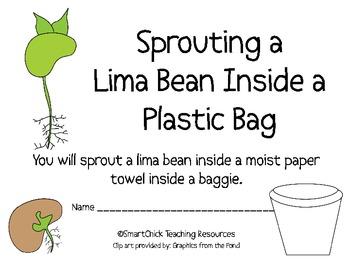 Complete Lima Bean Plant Packet! A HUGE Set of Hands.