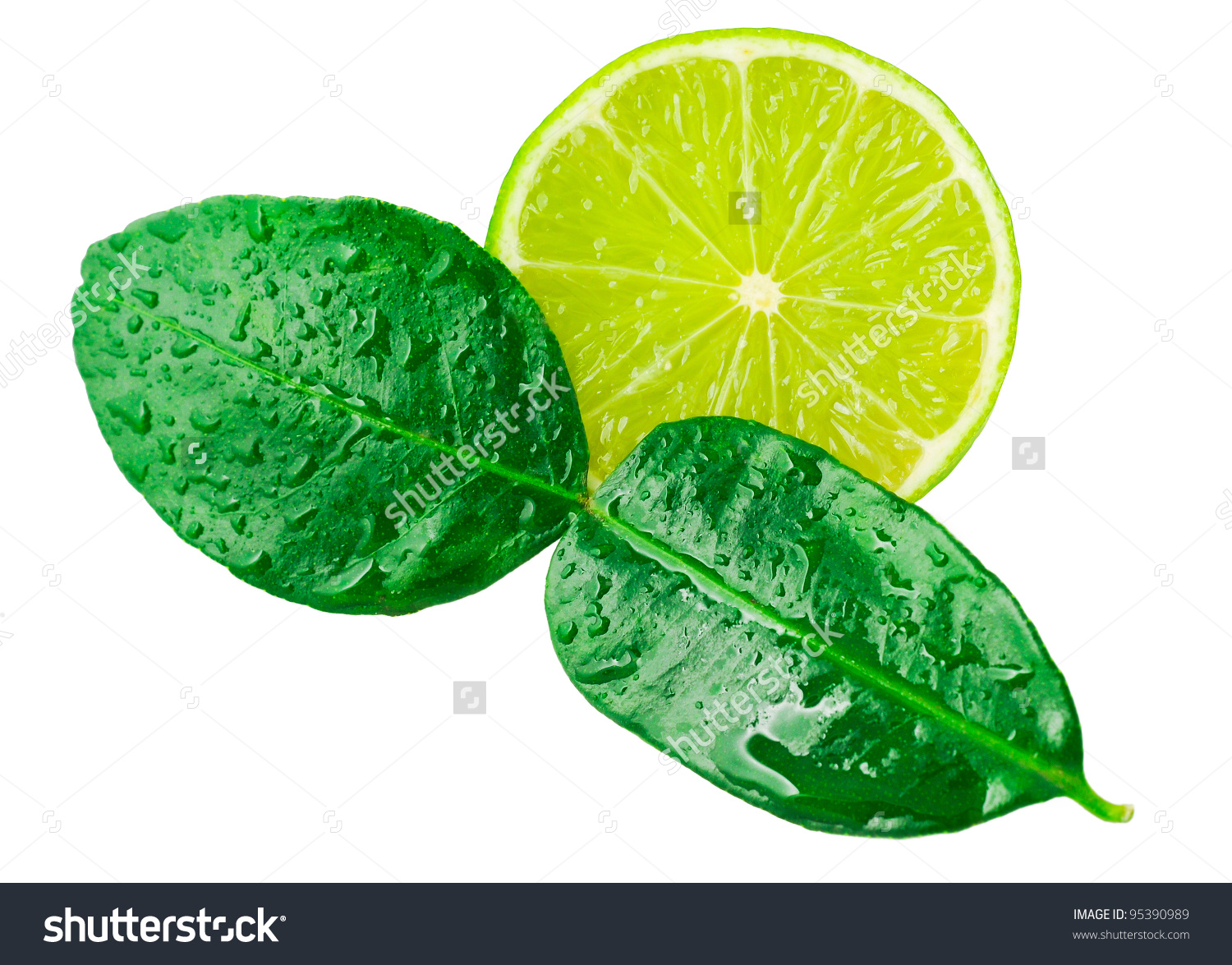 Lime Kaffir Lime Leaves Isolated On Stock Photo 95390989.