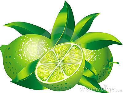 Calamansi Plant Clip Art.