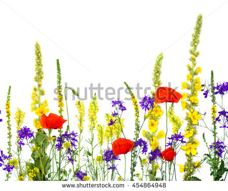 Linaria Stock Photos, Royalty.