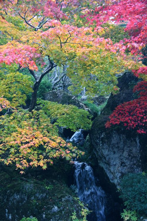 1000+ images about Colorful Trees on Pinterest.