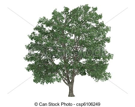 Tilia Illustrations and Clip Art. 55 Tilia royalty free.