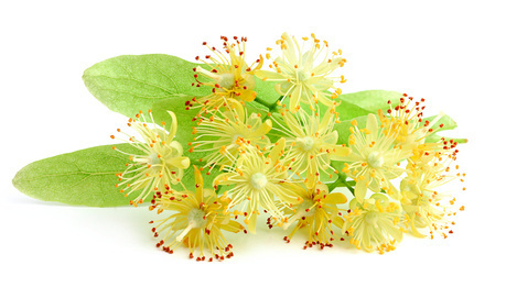 Linden Blossom Fragrance Oil.