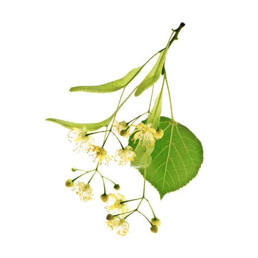 Linden Blossom Reed Diffuser.