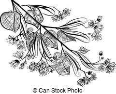 Linden Illustrations and Stock Art. 960 Linden illustration and.
