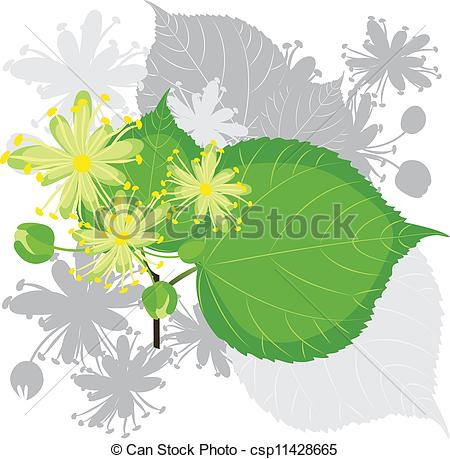 Clip Art Vector of Linden flowers with foliage csp11428665.