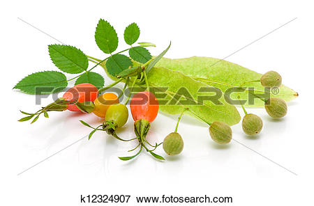 Picture of rosehip berries and seeds of linden on white background.