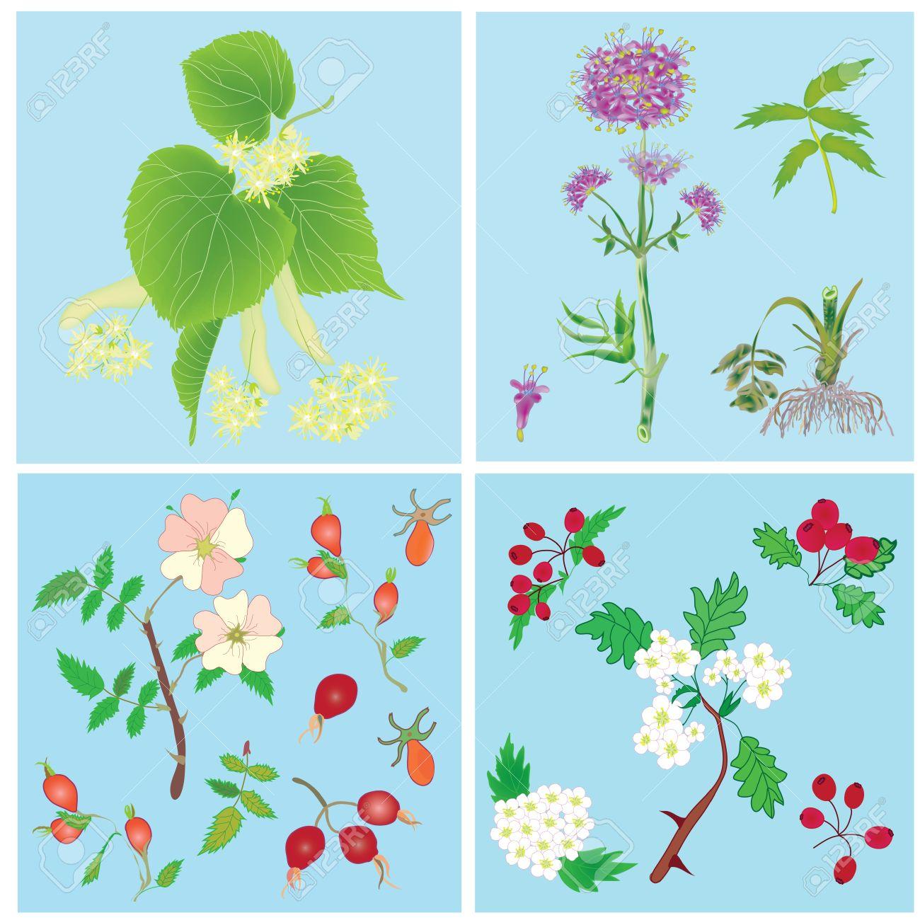 Set Of Officinal Plants.