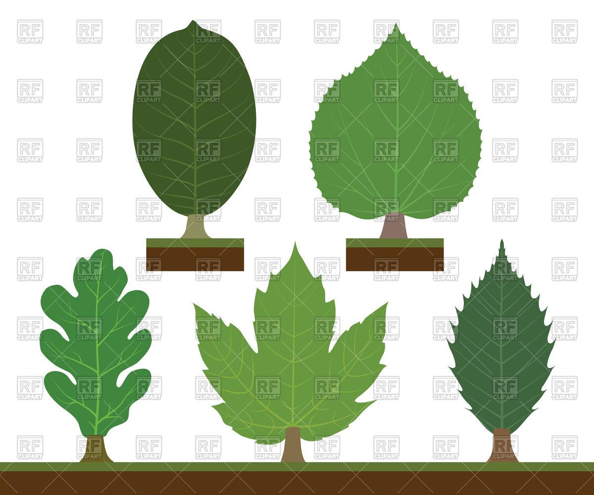 Walnut, linden, oak, maple and chestnut leaves Vector Image #87118.