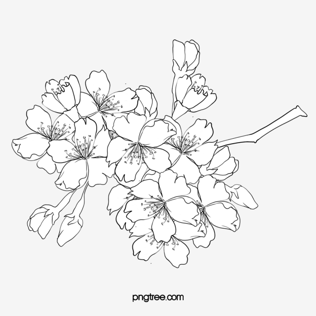 Line Drawing Flowers, Line Clipart, Line Drawing, Mellow PNG.