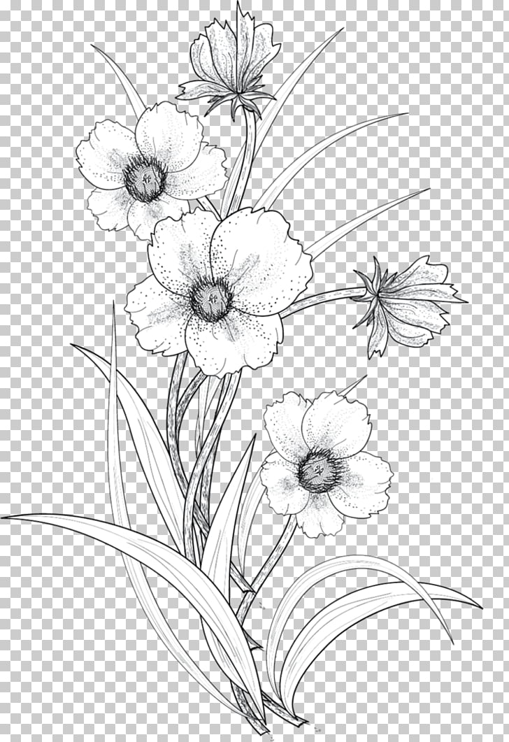 Drawing Flower Line art, Line drawing flowers, white flowers.